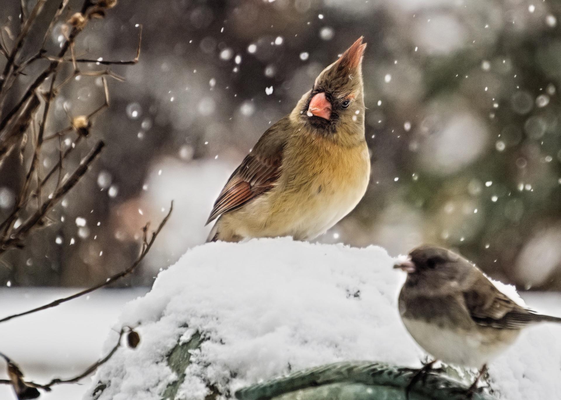 Vogels in de tuin herkennen