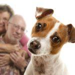 ouderen en huisdieren
