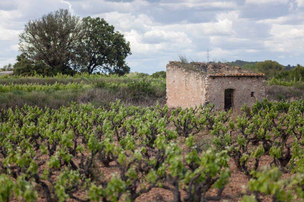 La Ruta del Vino de Jumila